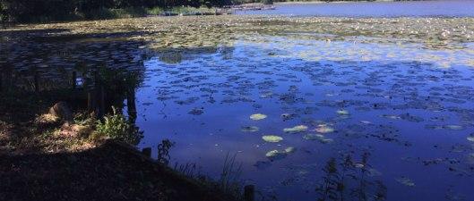 bagsværd-sø
